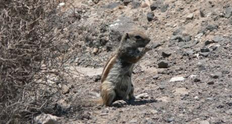 Un écureuil de Barbarie / Flickr CC