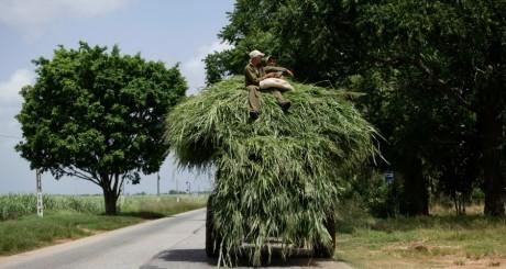 Fermiers cubains / Reuters