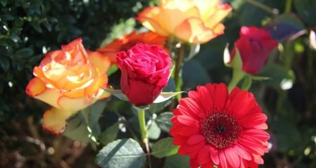 Fleurs by Azilis via Flickr CC