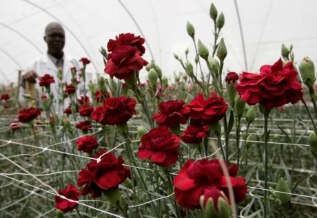 Maison verte à Naivasha, à 100 kilomètres de Nairobi, Kenya. Reuters / Antony Njguna