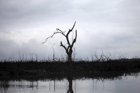 L'huile s'écoule sur la base d'un arbre  près de Port Harcourt au Nigeria. REUTERS/Akintunde Akinleye