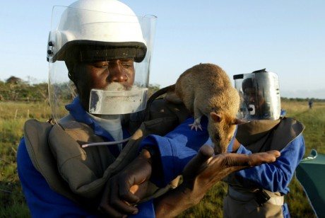 Un gestionnaire de rats mozambicain dans la ville de Vilancoulos au Mozambique, REUTERS/Howard Burditt
