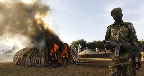 Un ranger du Kenya Wildlife Service assiste à l'incendie de 15 tonnes d'ivoire, le 3 mars 2015. REUTERS/Thomas Mukoya