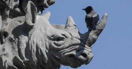 Une statue en forme de rhinocéros à Kiev en Ukraine. REUTERS/Gleb Garanich