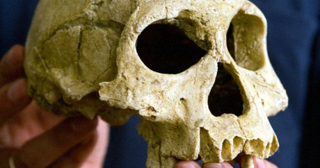 Un crâne d'Homo erectus. Photo Reuters