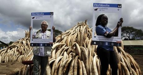 Des activistes posent devant des pyramides d'ivoire, le 28 avril 2016 à Nairobi. Crédit photo: TONY KARUMBA / AFP