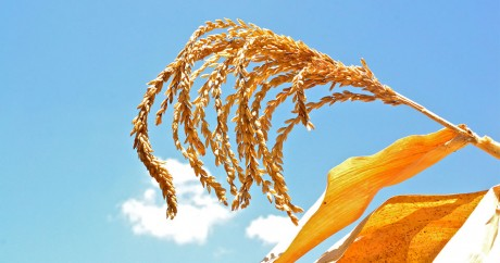 Crédit photo: Climate Change, Agriculture and Food Security/Flickr