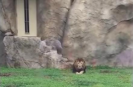 Capture d'écran de la vidéo tournée au zoo de Chiba, au Japon. DR