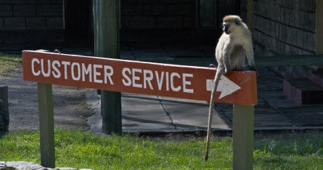 Un singe au Kenya. Crédit photo: Chris Makarsky via Flickr CC BY-SA 2.0