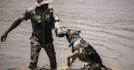 Dressage d'un chien anti-braconnage dans l'académie de Magaliesberg en Afrique du Sud.
