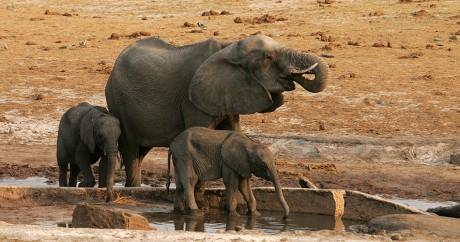 Des éléphants dans le parc Hwange au Zimbabwe, le 6 septembre 2012. JEKESAI NJIKIZANA / AFP