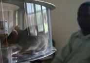 A l'école des rats démineurs