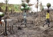 Inventer une agriculture «écologiquement intensive»