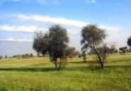 Mauritanie: l'écotourisme comme mode de vie