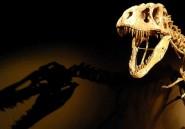 Compaoré, nouveau dinosaure africain