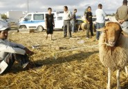 Algérie: Faut-il sacrifier le peuple ou le mouton?