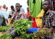 Le khat, ce nouveau haschisch venu d'Afrique de l'Est