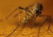 Le moustique : portrait d'un tueur en série