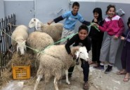 Revue de presse. Aïd el Kebir : Le mouton vend chèrement sa peau
