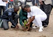 Congo : 27ème édition de la journée nationale de l'arbre