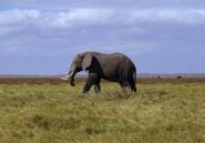 Afrique: le WWF appelle