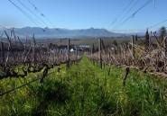 Des notes de Bach et Mozart dans un vin sud-africain
