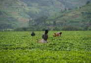 Les pays en développement réclament plus de transparence sur les marchés agricoles