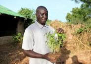 Mali: Oumar Diabaté, vétérinaire fermier et pionnier de l'agroécologie