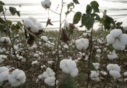 Burkina: manifestation contre Monsanto et les OGM