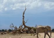 Les éléphants, grands oubliés du sommet Chine-Afrique ?