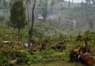 Afrique: une initiative pour restaurer 100 millions d'hectares de forêts d'ici 2030