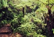 Les pistes forestières abîment moins la jungle que l'on ne le pense