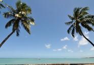 Les producteurs d'eau de coco ont trop secoué le cocotier