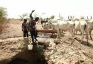 Nigeria: la lutte contre le vol de bétail dope le business du kidnapping