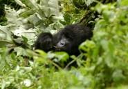 "RD Congo: Greenpeace ""salue"" l'annulation de contrats forestiers illégaux"