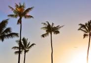 Les palmiers poussent dans nos jardins mais disparaissent de Madagascar