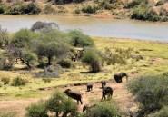 Kenya: entre pillage et braconnage, la guerre des pâturages