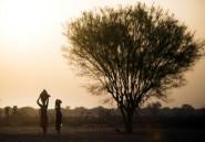Au Soudan du Sud, la famine pousse les gens à manger des feuilles d'arbres