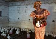 La tontine, ou le micro-crédit au féminin, fait recette au Sénégal