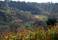 Le Kenya reconnu coupable d'avoir violé les droits de la minorité ogiek