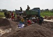 Côte d'Ivoire: une ONG dénonce la déforestation due