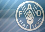 FAO: développer le secteur rural contre la faim et la pauvreté