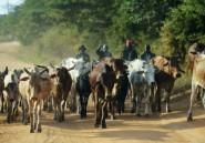 Vaches aux enchères: le Kenya a convoqué l'ambassadeur tanzanien