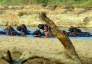 """Milices et braconniers exercent une """"pression énorme"""" sur la faune d'Afrique centrale (rapport)"""