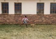 Dans le township d'Howick, les chiens comme antidote