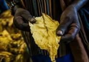 Le travail des enfants fréquent dans le secteur du tabac au Zimbabwe (HRW)