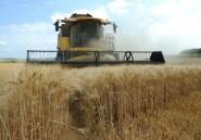 Exportations de blé: la France peine