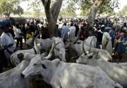 """Au Sahel, sécheresse et jihad créent une """"crise pastorale"""" explosive"""