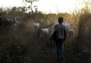 Nigeria: 13 morts dans une attaque de voleurs de bétail dans le nord