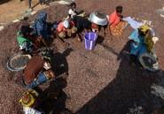 La Côte d'Ivoire adopte une loi pour freiner la contrebande de cacao et de cajou